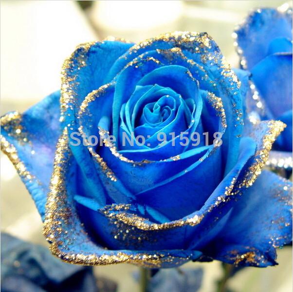 Flower seeds Bonsai 200 Pcs Natural Fragrant Sparkling blue phnom penh rose seeds Home & Garden Free shipping(China (Mainland))
