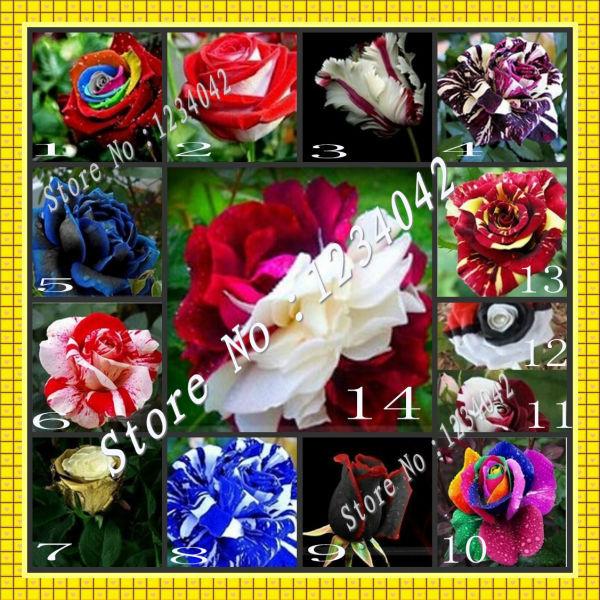 Bonsai flower seeds 280PC rare plants rose seeds, 14 varieties roses seed(China (Mainland))