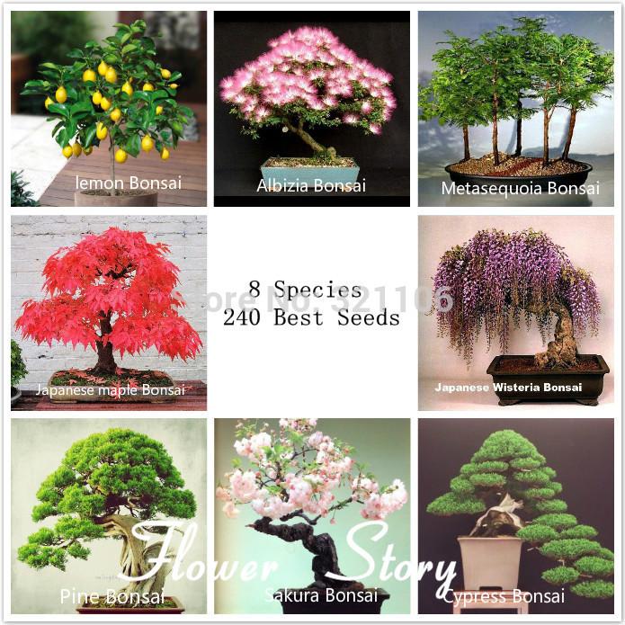 bonsai baum kaufen billigbonsai baum partien aus china. Black Bedroom Furniture Sets. Home Design Ideas