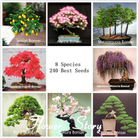 8 kinds Bonsai Tree Seeds, 240 seeds, Perfect DIY Home Garden Bonsai  package , Free shipping+free gift