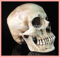 2014 Halloween horror skull resin 1:1 human simulation skull model medical,free shipping