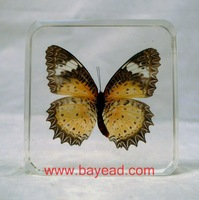 pretty Home Decoration,Real Butterfly inside Amber resin crafts, gift,business gift,free shipping