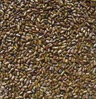 Free shipping 2 lbs, Jue Ming zi,Cassia tora Seeds Tea,Sickle Senna