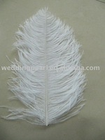 """wholesale 300pcs/lot 10-12"""" White Ostrich Feather Plume FREE SHIPPING"""