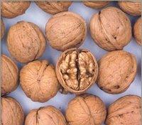 Best 4 Brain walnut, Shennongjia farm-grown thin shell walnut