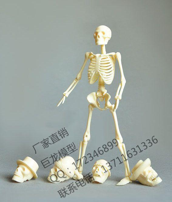 free shipping Human body 20cm assembling skeleton model educational toys model human skeleton model spare parts packaging(China (Mainland))