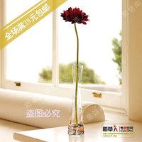 Fashion brief single glass vase small vase unique transparent vase glass vase