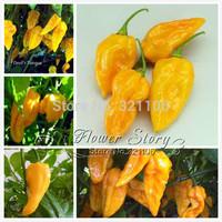 Devil's Tongue Hot Pepper 10+ Seeds