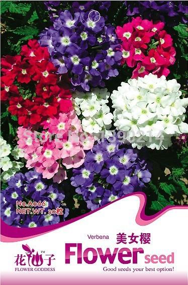 30 Verbena Hybrida seeds, Blending Verbena Hybrida seeds, Germination rate > 80%, Flower gardening Home & Garden(China (Mainland))