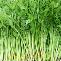 1 pack 400 parsley celery Watercress seeds celery seed  indoor courtyard balcony kind of potted vegetable seeds free shipping