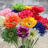 Flower seeds 100 pcs seeds African chrysanthemum flower seeds a variety of colors mixed Bonsai seeds Home Garden free shipping