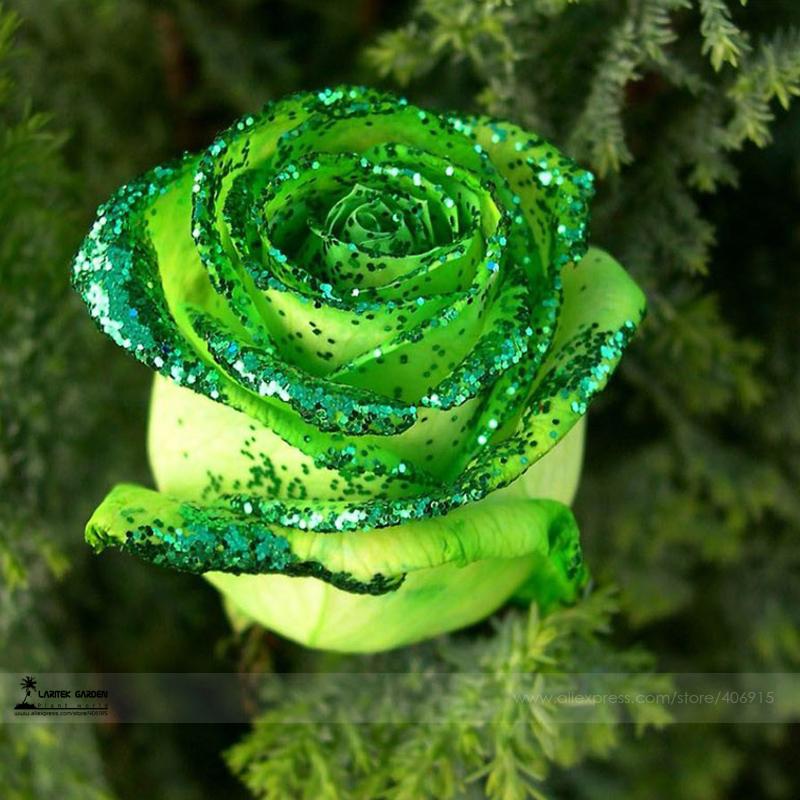 купить Карликовое дерево Flower Goddess ,  50 /, #LG00015 недорого