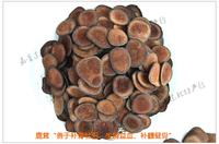 free shipping Chinese pilos deer horn cartialgenous 50g antiaging antifatigue sex enhancement herbal supplements wholesale