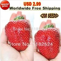 "2014 Sementes Seeds Vegetables Chili Usd 2.99 Worldwide free Shipping 200pcs ""giant Strawberry"" Seeds Bonsai Four Season Fruit"