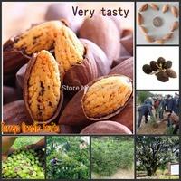 Free Shipping 10pcs Torreya grandis tree seeds Fruit tree seeds
