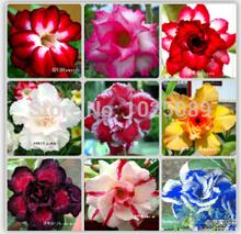 50 pcs / saco , Desert Rose sementes, sementes em vasos , sementes de flor, variedade completa, o brotamento taxa de 95%, ( cores misturadas )(China (Mainland))