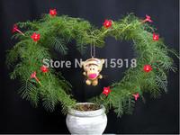 Flower seeds 50 PCS Mix Mini Perennial Cypress vine Starglory Flower Climb Plant seeds Bonsai DIY home garden free shipping