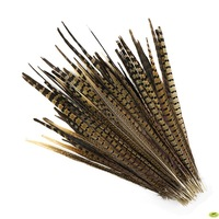 Free Shipping 100pcs 25-30cm 10-12 inches natural tail Ringneck pheasant feather ring-neck pheasant tail feather wedding crafts