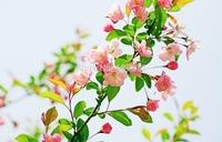 20pcs/lot Begonia flower seeds Beautiful flower seeds Garden Terrace windowsill plant seeds