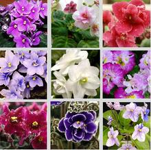 New Home jardim Bonsai planta 20 sementes micropropagação de violeta africano Saintpaulia ionantha Wendl flor sementes grátis frete(China (Mainland))