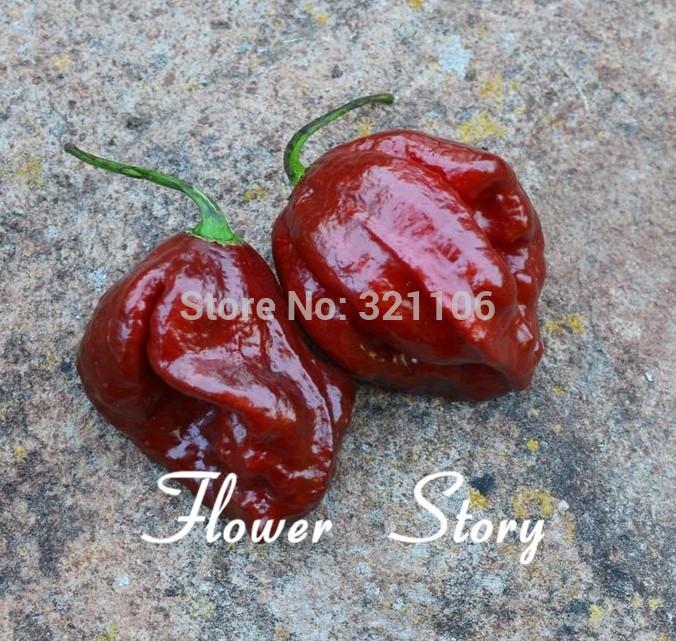 Big promotion ,20 Jamaican Hot Chocolate Habenero Pepper Seeds , Rare variety, Free Shipping(China (Mainland))