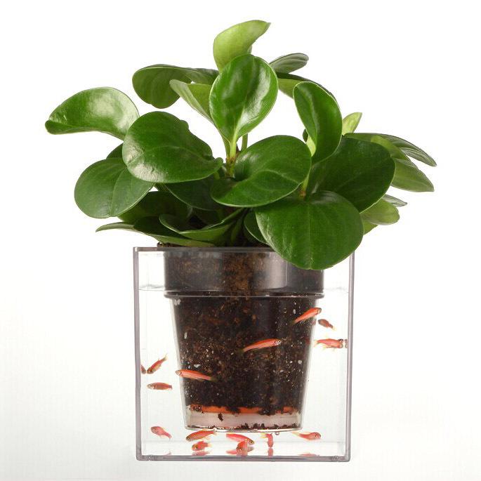 Fish Tank Plantation : aquarium en Ligne ? des Grossistes pots de plantes daquarium ...