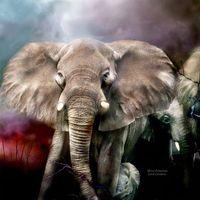 Art Deco wall painting handmade home decor living room inkjet elephant animal pictures