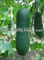 Farmland - Dadong melon - Seed - Giant - East melon - (seeds) - free shipping