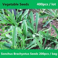 Health Function Sonchus Brachyotus Seeds 400pcs, Field Sowthistle Herb Qu Mai Cai Vegetable Seeds, Unique Taste Qu Ma Cai Seeds