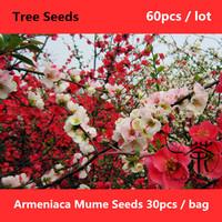 Flowering Plum Armeniaca Mume Seeds 60pcs, Ornamental Tree Meihua Chinese Plum Tree Seeds, Beauty Plum Blossom Prunus Mume Seeds