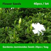 Widely Used In Garden Gardenia Jasminoides Seeds 40pcs, Aromatic Elegant Cape Jasmine Flower Seeds, Beauty Common Gardenia Seeds