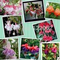 200 pcs/bag,Fuchsia flower seeds lantern flower indoor balcony bonsai seed flowers seeds