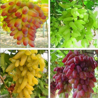 Free shipping, Senior Courtyard Plants , Delicious Fruit seeds , Gold Finger 100pcs Grape Seeds