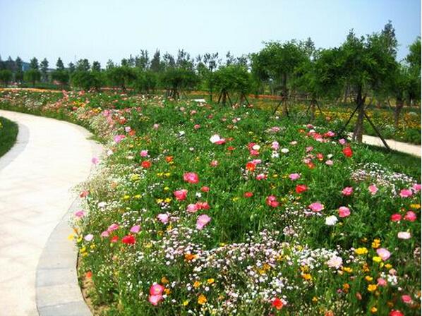 200 Mix Colorful Shade Tolerant Wildflowers Seeds Wild Flower Garden Flower