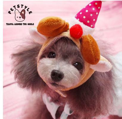 Cute Pets Cats Pet Dog Cat Puppy Cute Hat