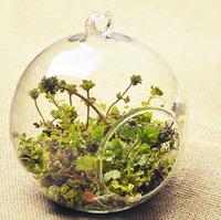 20*20cm Home Decorations Hanging glass vase moss transparent crystal succulents round  micro landscape ecological bottle gift