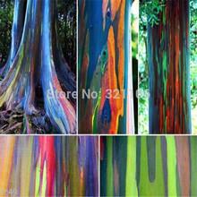 *RAINBOW TREE* 50 seeds *(Eucalyptus deglupta)* Mindanao Gum, free shipping