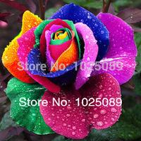50 pcs/bag Beautiful Flower Rainbow rose seed Rose Seeds