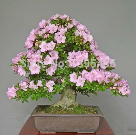 free shipping Flower bonsai seeds flower plant bonsai indoor petunia petals flower seeds bonsai balcony 20