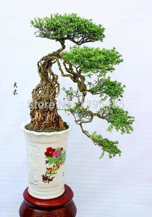 online kaufen gro handel tree growing aus china tree. Black Bedroom Furniture Sets. Home Design Ideas