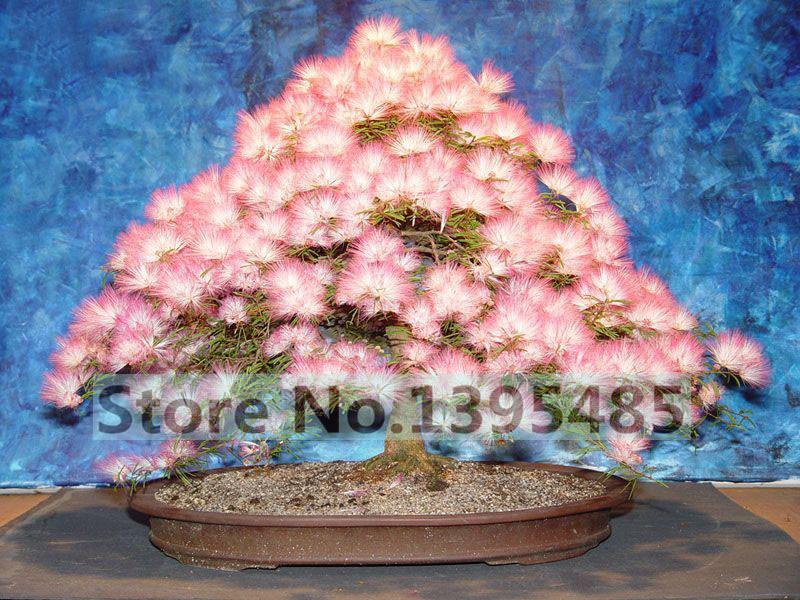 Silk Bonsai Trees Like Silk Tree Bonsai