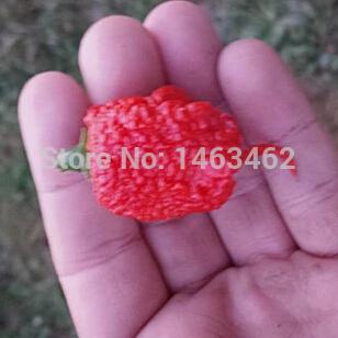 Карликовое дерево Seeds vegetables , worldstest, /20 карликовое дерево seeds vegetables 15