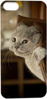 Little Grey Cat Hiding Under Chair Hard Unique Designer Slim case for apple iphone 5 5S 5G