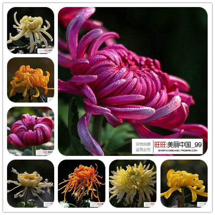 Winter Flowering Plants Flowers Seed Indoor Plants