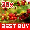 30 ARABICA COFFEE Plant (Coffea Catura Arabica) SEEDS Best French Vietnamese