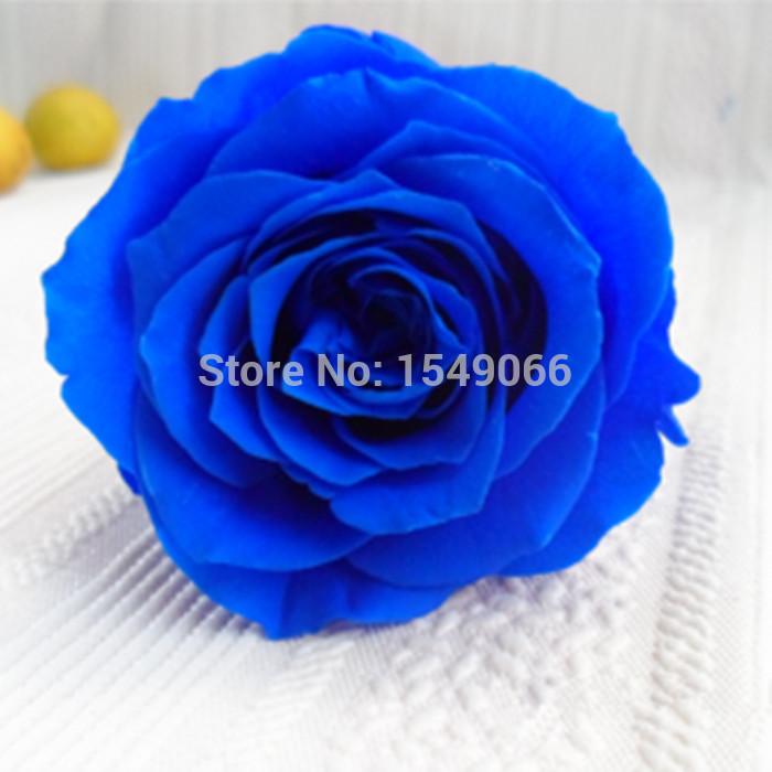 Holiday Gift Valentine Gift Rose Rose Flower preservation 6-7cm(China (Mainland))