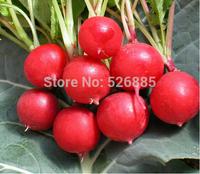 free shipping Cherry radish seeds, radish seeds, garden radish - 50 Seed particles