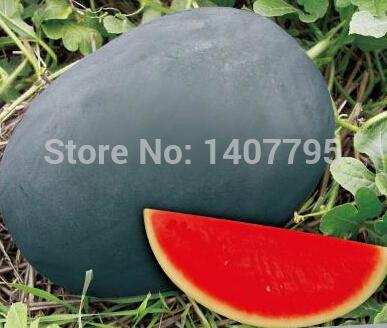 Карликовое дерево Fruit seeds ,  /12 карликовое дерево china seeds dionaea muscipula