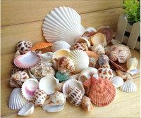 500gram of fine natural conch shell scallop aquarium fish tank decorative photography props