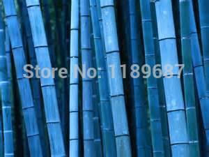 Карликовое дерево China seeds 10 /, KLO908 карликовое дерево china seeds 100 0 5 1 5 thg678